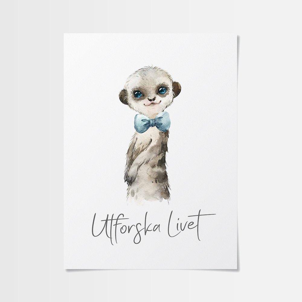 Billiga posters av gullig surikat