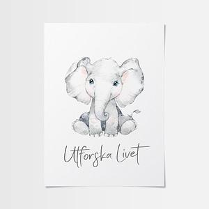Babyrum pojke med söt elefantunge