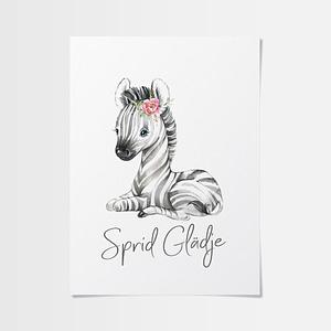 Zebra poster med en söt zebraunge